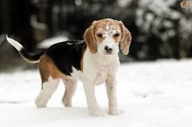 dogwinter